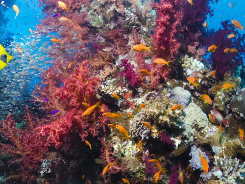 Even Paris Climate Protocol Is Insufficient to Shield Coral Reefs from Climate Change
