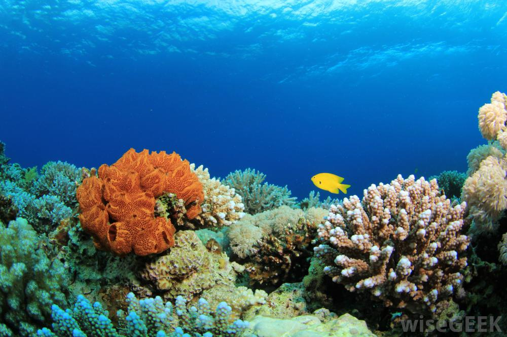 99% Coral Reefs Are Endangered Due To Climate Change, Warns Study