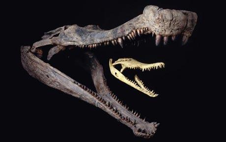 palaeontologits