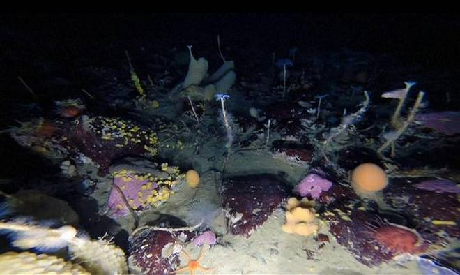 Underwater Robot Spot a Multicolored World under Antarctica's Sea Ice