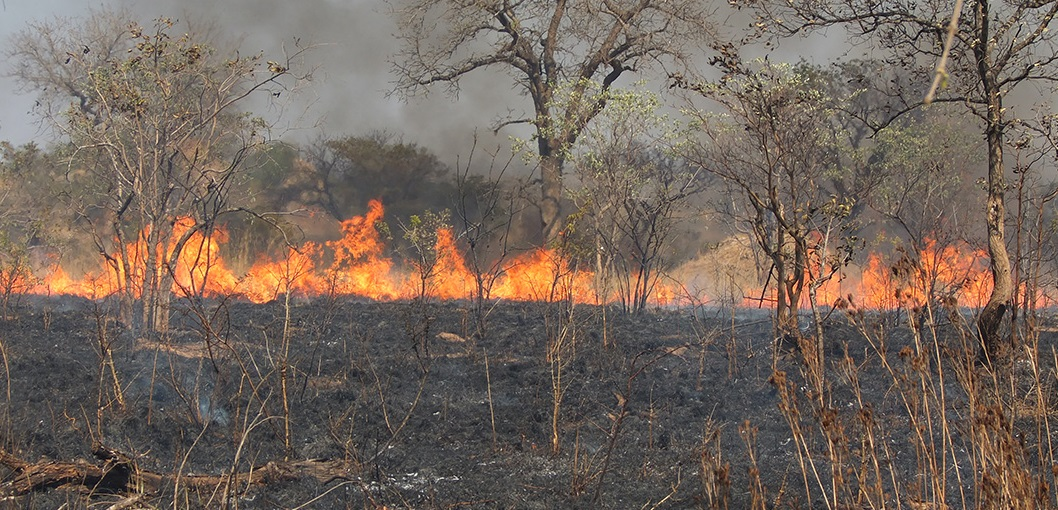 wildfire in africa