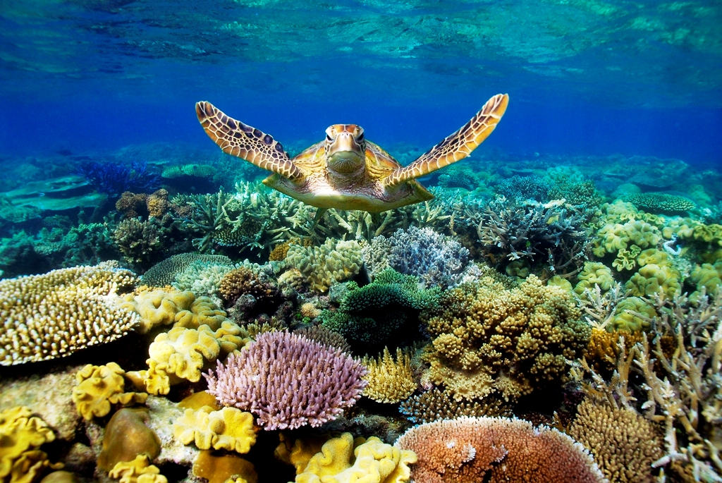 Australia's Iconic Great Barrier Reef Corals