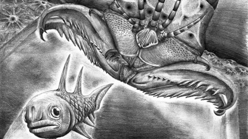 Researchers discover monster bristle worm with largest jaw named after metal guitarist