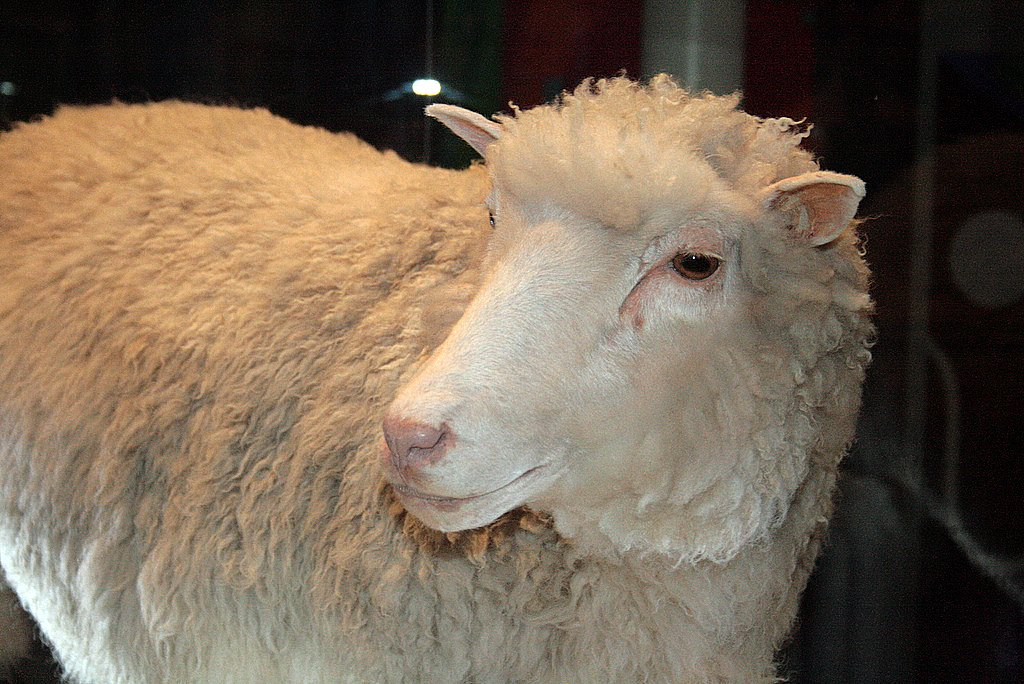 Dolly, The cloned sheep, Didn't die early because she was a clone