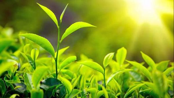 First photosynthesis took place 1.25 billion years ago: Report