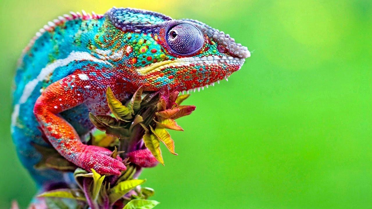Ultraviolet Lizards: Chameleon Bones Glow Fluorescent Under UV Light