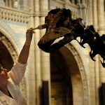 Dippy the dinosaur to travel eight destinations on its UK tour