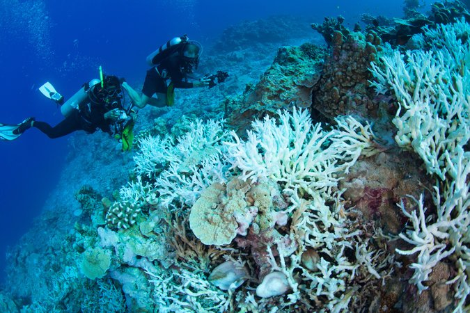 Heat waves is damaging the diverse variety of coral reefs at the Great Barrier Reef, Australia