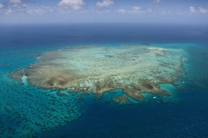 Great Barrier Reef gets $379 million investment to combat coral die-offs