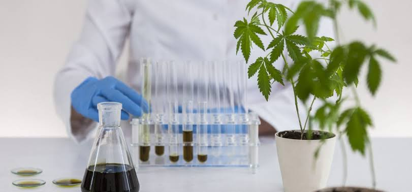 Cannabis Industry Software